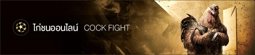 สมัครเอเย่นต์ COCK FIGHT